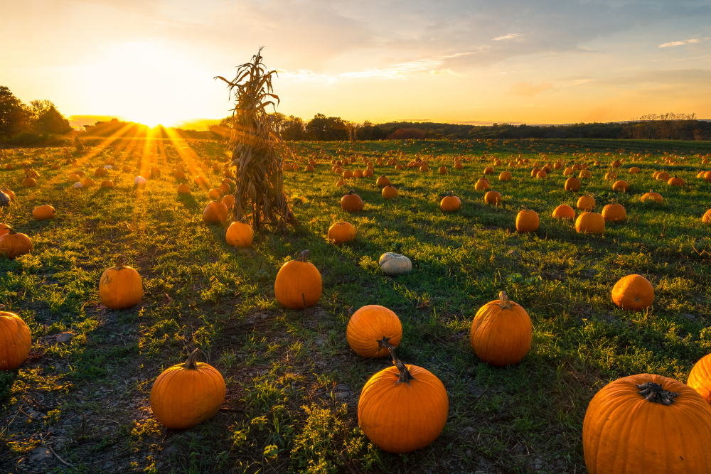 Fall pumpkin patches to visit in Kansas City